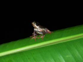 froglow